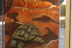 Desert tortoise detail